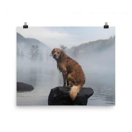 golden retriever foggy river poster by Mike Hosier